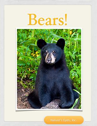 ebook, bears